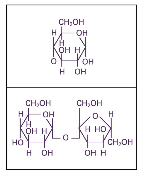 Carbo_Synthesis