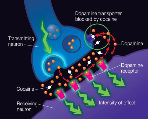 Cocrrenneuron