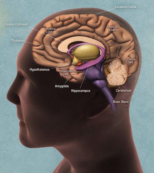 01_brainside